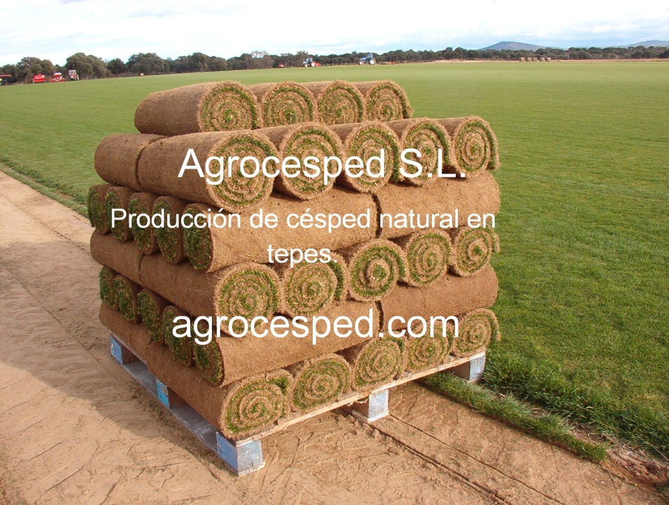 Césped en tepes agrocesped