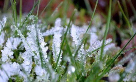 Césped en época invernal