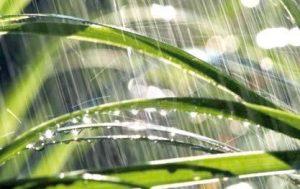 Césped mojado