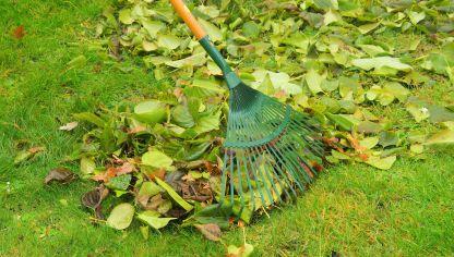 Recogida de hojas secas