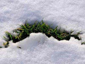 Césped nevado
